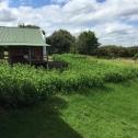 africa-silks-farm