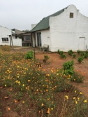 africa-silks-rearing-shed