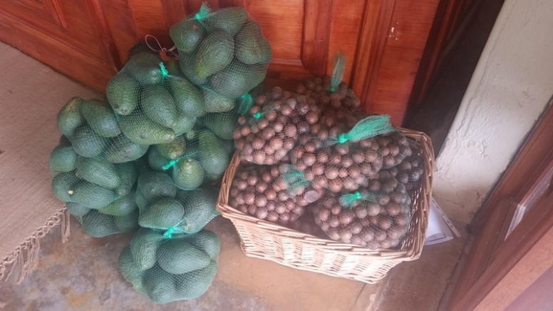 macadamias-and-avos