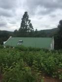 mulberry-lane-outside-fields